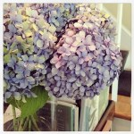 Sunday Bouquet: Last of the Hydrangeas