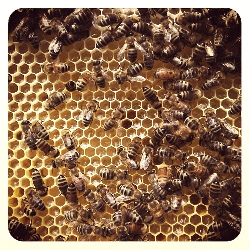 sharon-kitchens-beehive
