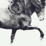 ARTmonday: 13 Photographs from Lumitrix