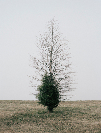 daniel-seung-lee-belmont-tree