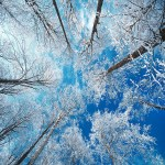 ARTmonday: Winter Trees