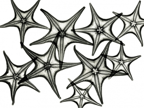 albert-koetsier-xray-photo-starfish
