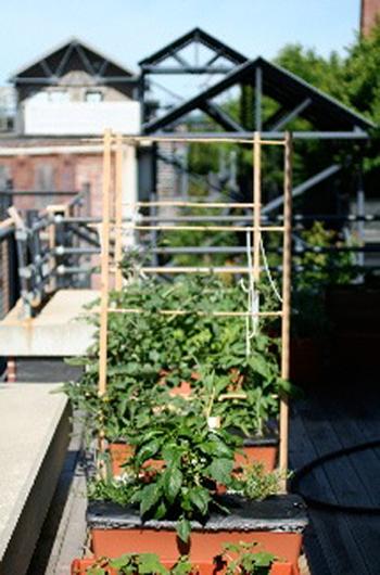 sharon-kitchens-vegetable-garden