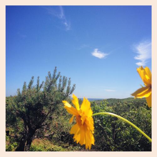 flowers-against-dunes
