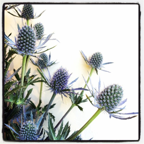 Thistle From Wildflowers Florist In Provincetown Cape Cod