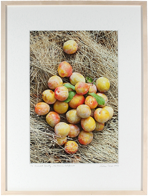Golden Apples On Straw Photo