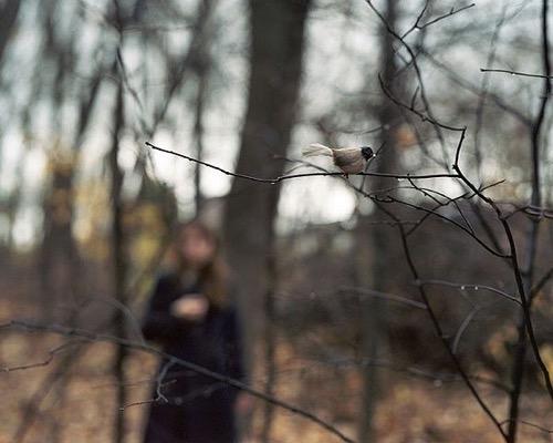anastasia-cazabon-forest