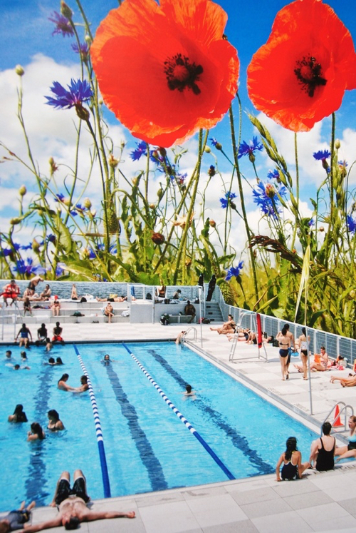 john-turk-poppy-pool
