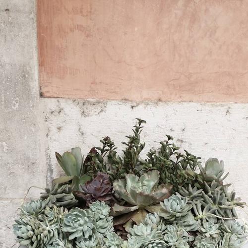 succulents-oui-oui-studio