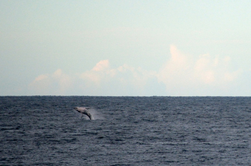 whale-michael-nowak