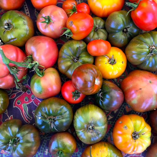 Heirloom Tomatoes At The Truro Ag Fair