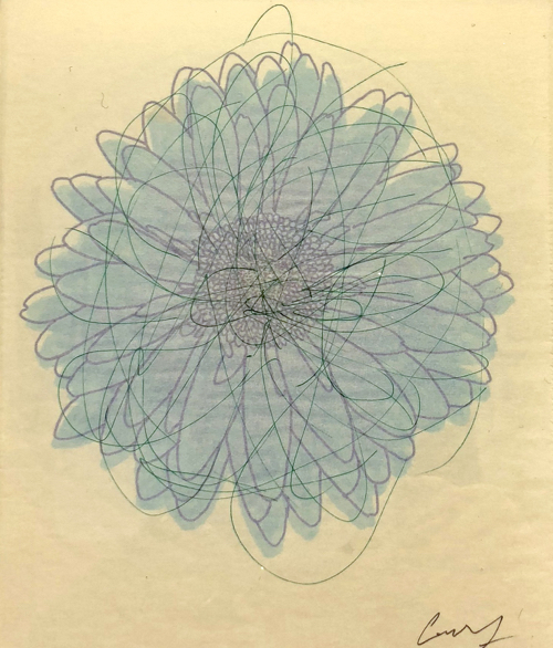 Boston Artist Casswang Fraley Flower Drawing