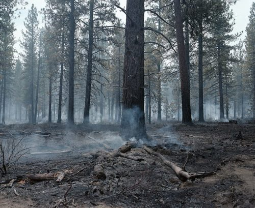 Controlled burn outside of Bend, Oregon, 2018 By Kate Truisi Fraction Holiday Print Sale