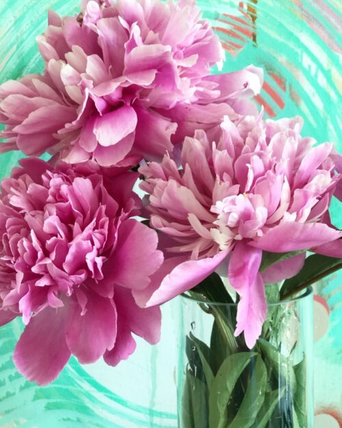 Pink Peonies Cape Cod Summer Flowers