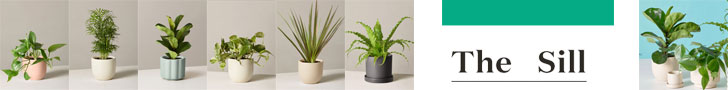 Get Succulents By Mail