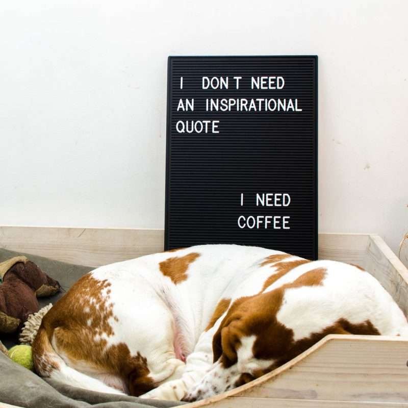 interieur hond