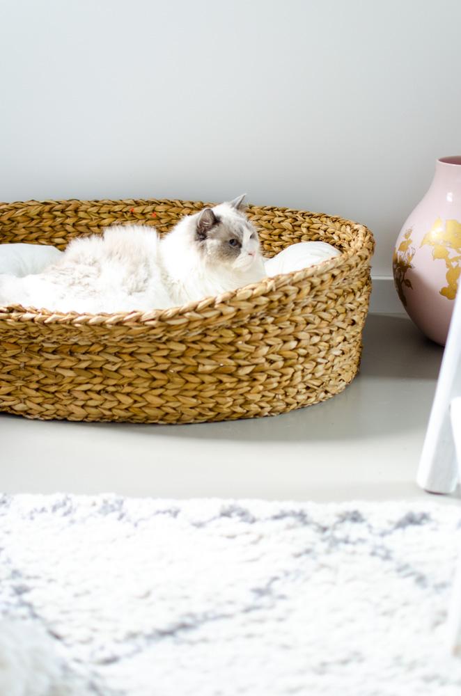 Yoshiko hondenmand