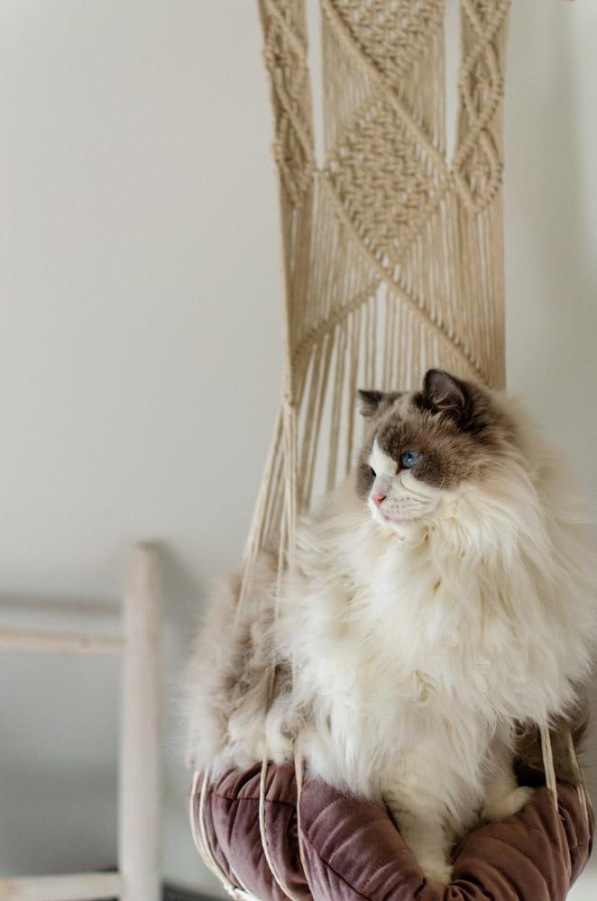 macramé katten hangbed