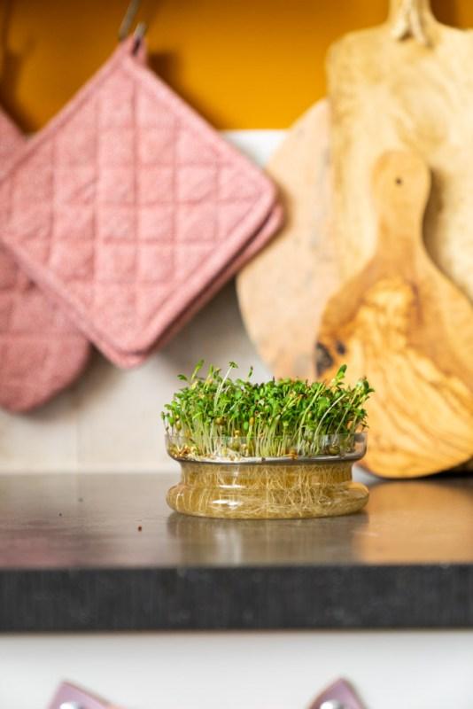 kiemgroenten kweken met kiemschaaltje