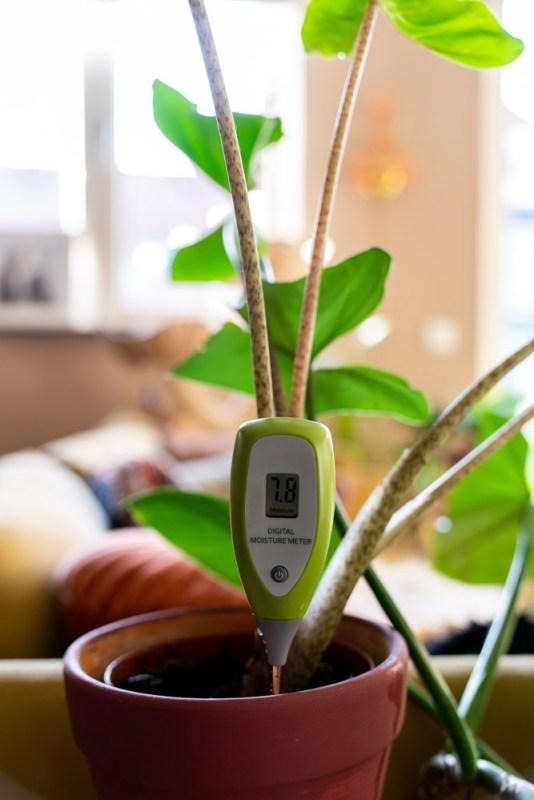 vochtmeter kamerplanten