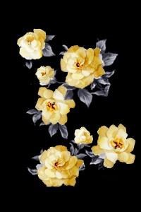romatic-roses