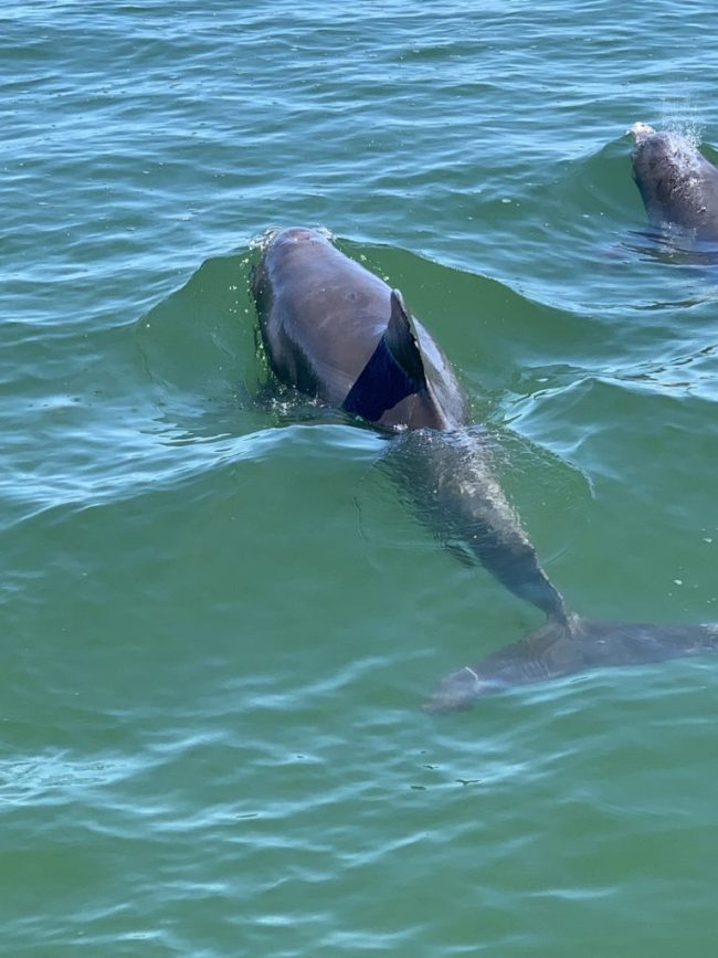 dolphins near egmont key