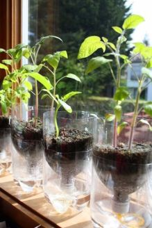 50 Ways to Reuse Plastic Bottles to Cute Planters Ideas 38