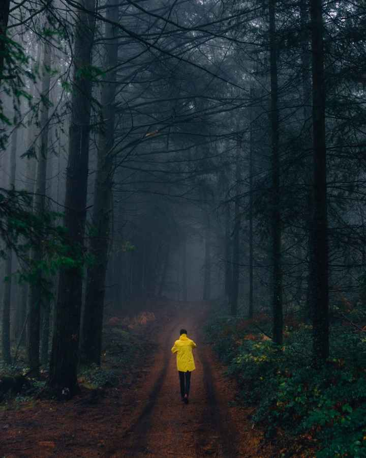 person wearing yellow jacket walking in forest