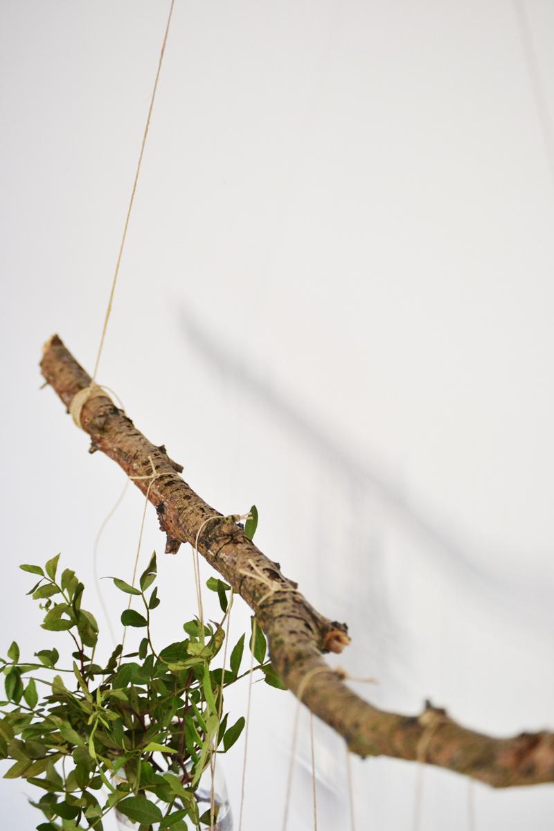 plantas-colgantes15