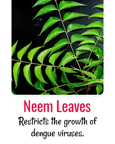 Neem Leaves For Dengue Treatment