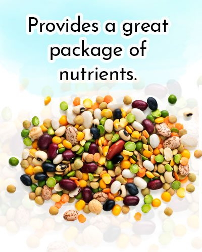 Beans for Antioxidants