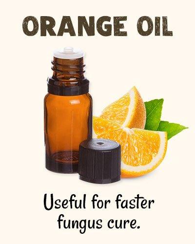 Orange Oil for Toenail Fungus