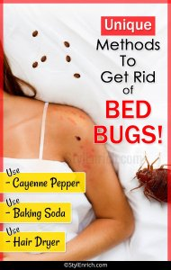 Unique Methods To Get Rid of Bed Bugs