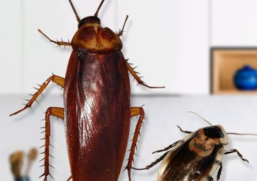Tips to Get Rid of Cockroaches in Kitchen