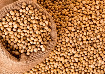 Why Soybeans are Essential For Women?
