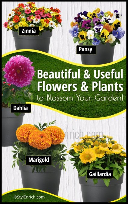 Flowers & Plants to Blossom Your Garden!