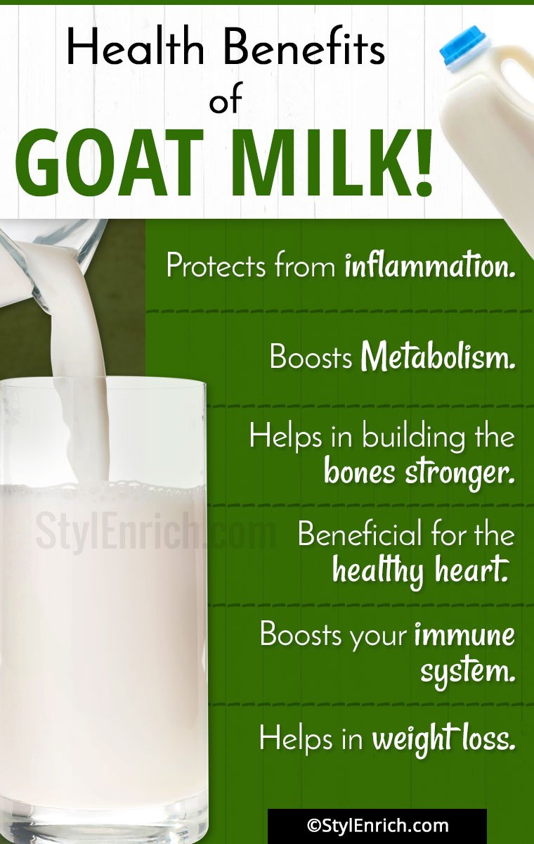 Goat milk: the benefits and harm. The benefits of goat milk for baby 86