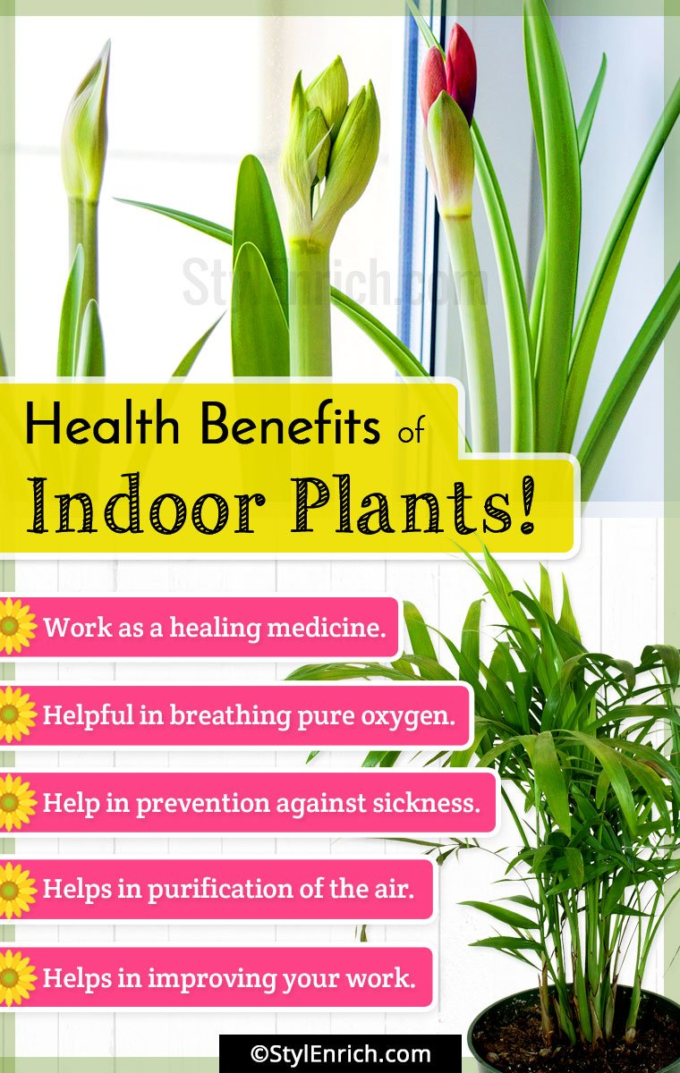 Best Indoor Plants Get Natural Air Purifiers In Your House