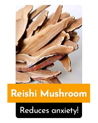 Reishi Mushroom Herb For Energy
