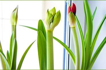 Health Benefits of Indoor Plants