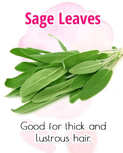 Sage Leaves For Premature Gray Hair