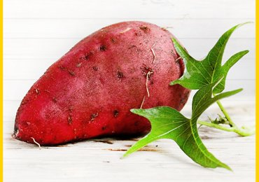 How To Grow Sweet Potatoes?