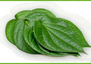 Betel Leaves Benefits