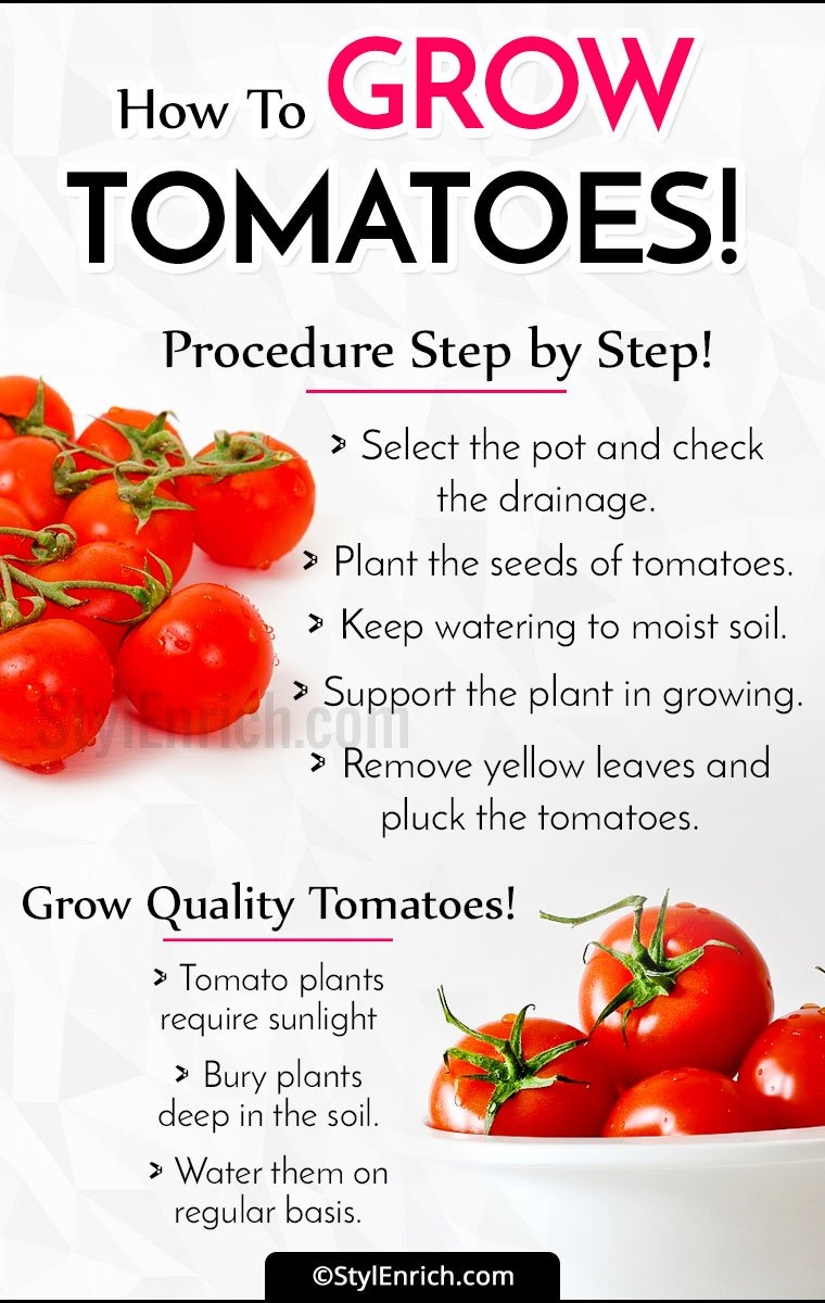 How To Grow Tomatoes?
