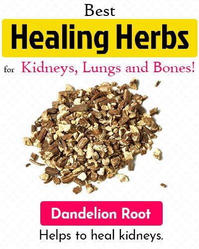 Dandelion Root Healing Herb