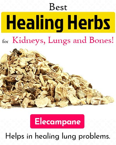 Elecampane Healing Herb