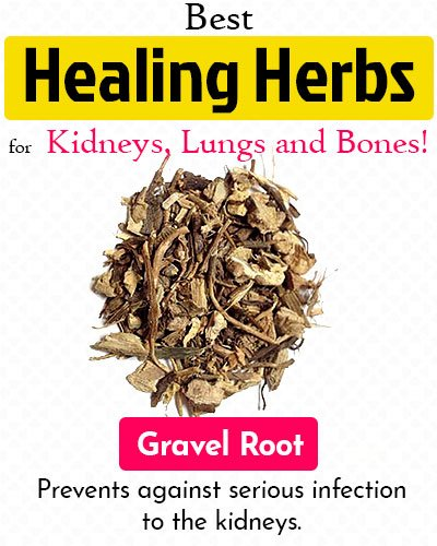 Gravel Root Healing Herb