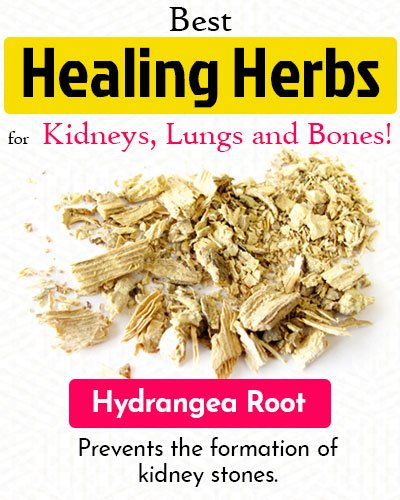 Hydrangea Root Healing Herb