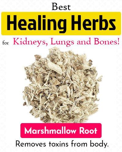 Marshmallow Root Healing Herb
