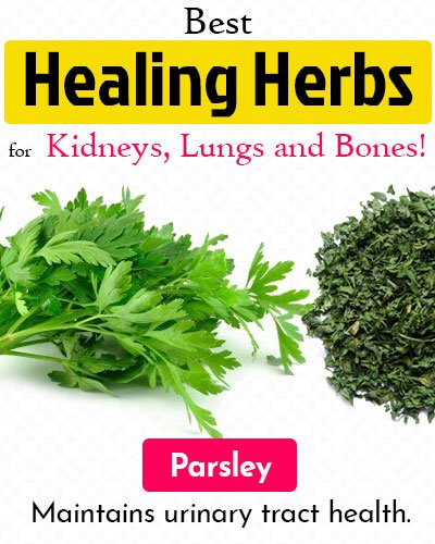 Parsley Healing Herb